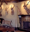 Safari Trophy and Billiards Room